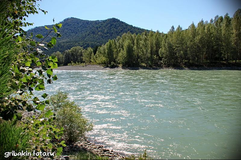 IMG_16_Altai_Katun river